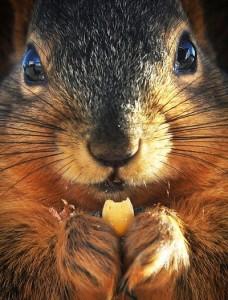 squirrel-shoot-new-york-20130215-001