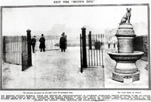 BrownDog5-March11,1910