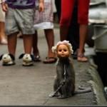 scimmiabambola_thumb